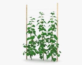 3D model of Cucumber Plant