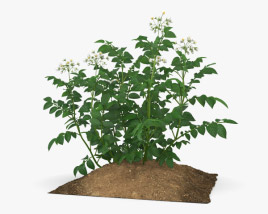 3D model of Potato Plant