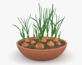 3D model of Onion Plant