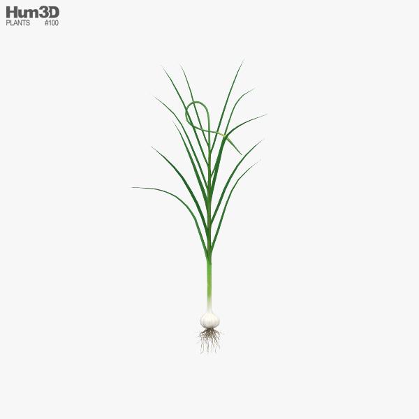 Garlic Plant 3D model