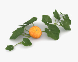 3D model of Pumpkin Plant