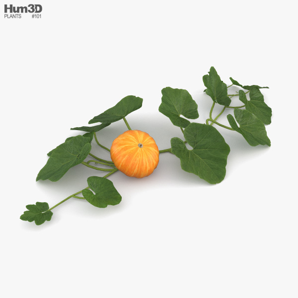 Pumpkin Plant 3D model