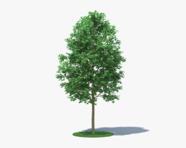 3D model of London Plane Tree