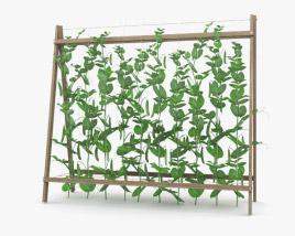3D model of Pea Plant