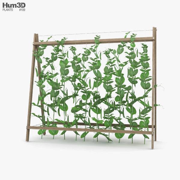 Pea Plant 3D model