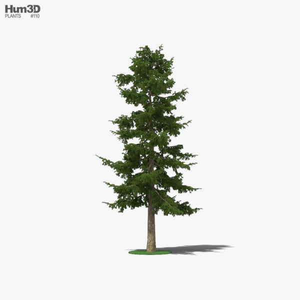 3D model of Cedar Tree