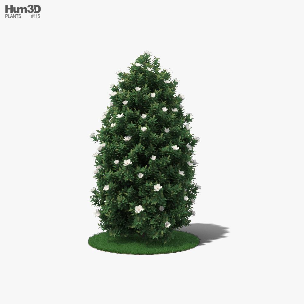 Magnolia Tree 3D model