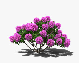 3D model of Rhododendron
