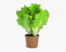 3D model of Lettuce Plant