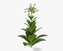Tobacco Plant 3D model