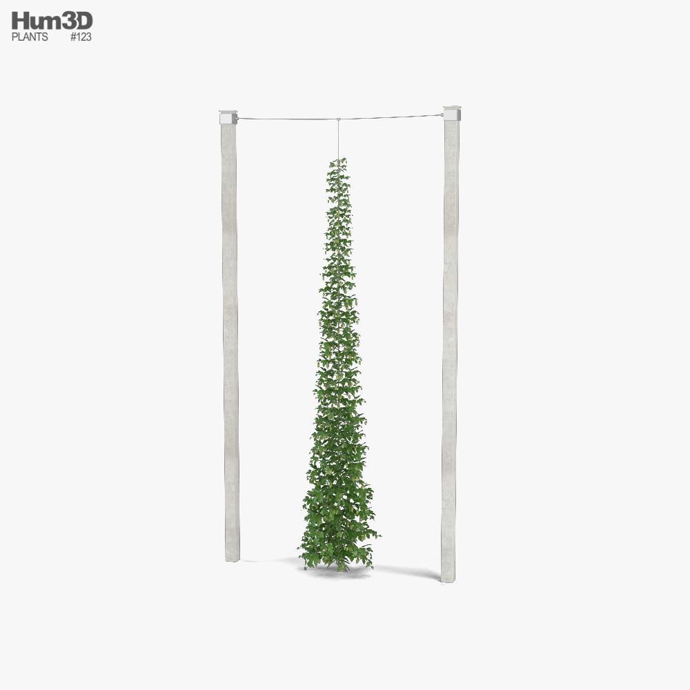 Green Growing Hops 3D model