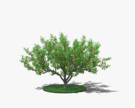 Peach Tree 3D model