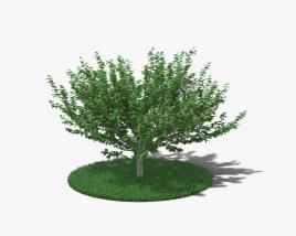 Hazelnut Tree 3D model