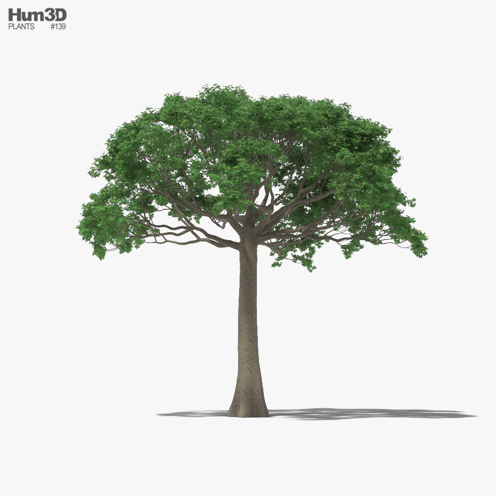 Ceiba 3D model