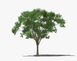 Brazilwood 3D model