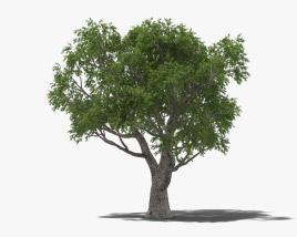 Cork Oak 3D model