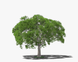 Guanacaste tree 3D model