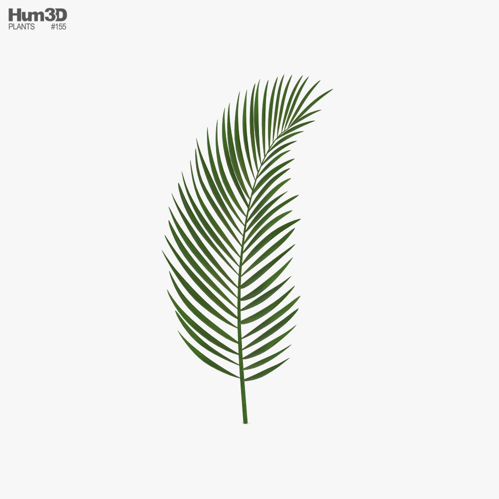 Palm Leaf 3D model