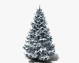 Winter Blue Spruce 3D model