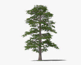 Lebanon Cedar 3D model