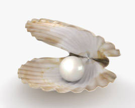 Seashell with Pearl 3D model