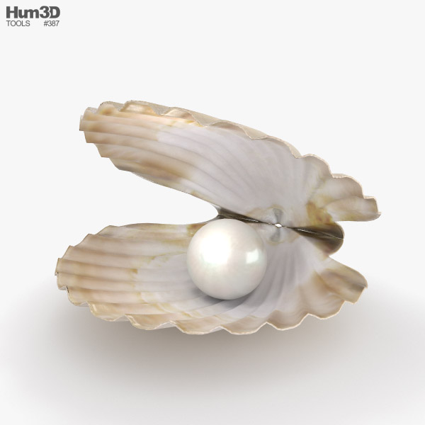 3D model of Seashell with Pearl