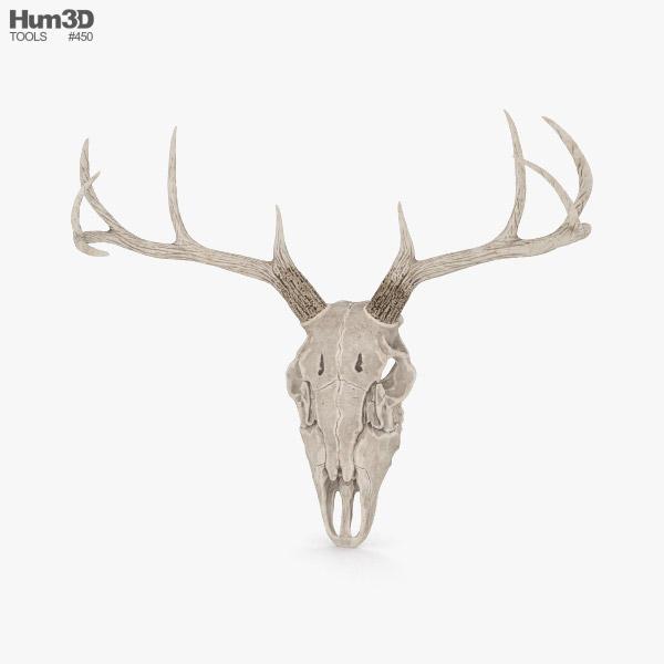 3D model of Deer Skull
