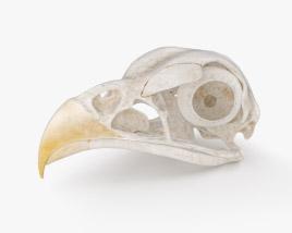 3D model of Bird Skull