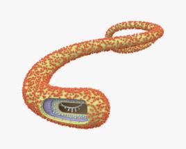3D model of Ebola Virus